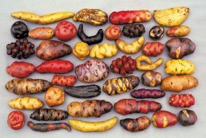 Potatoes_L