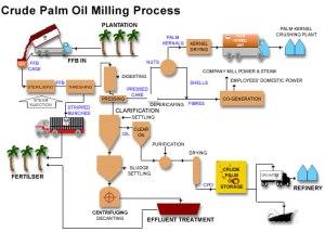 crudePalmOilMillingProcessing